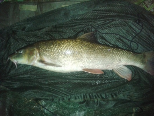 Another thick set lump of 6lb+ finished of the session.