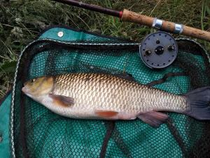 4lb 8oz Chub 18 x 12.5 Trotted Breadflake Dane 22-06-14