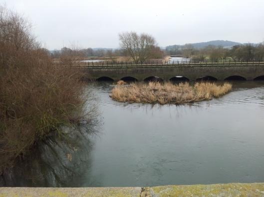 River Dove 14-02-15 (2)