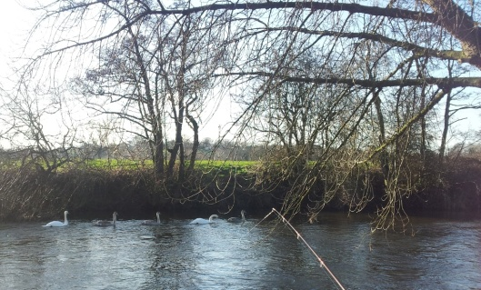 River Dove 17-01-15 (10)